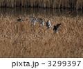 飛翔 オオタカ 野鳥の写真 3299397