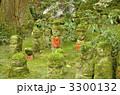 三佛寺 三仏寺 苔の写真 3300132