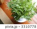 盆栽 植木 竹の写真 3310778