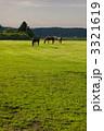 家畜 サラブレッド 草を食むの写真 3321619