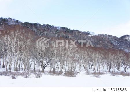 白樺牧場 (赤城山) 3333388