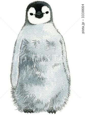 皇帝ペンギン ヒナ ペンギンのイラスト素材 3338664 Pixta