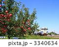 リンゴ園 フジ リンゴ農家の写真 3340634