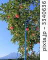 フジ フルーツ リンゴの写真 3340636