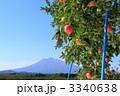 フジ フルーツ リンゴの写真 3340638
