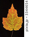 葉 木の葉 落葉性の写真 3344654