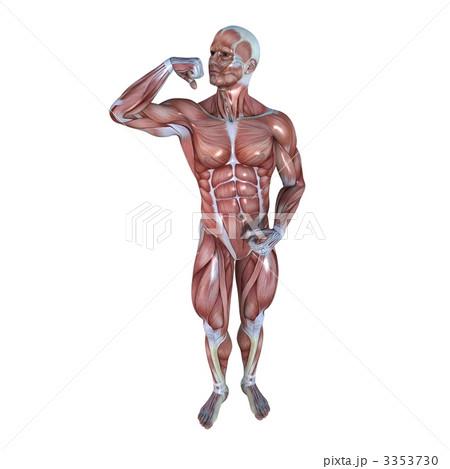 男性人体模型 3353730