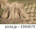 藁 ワラ 稲の写真 3364675