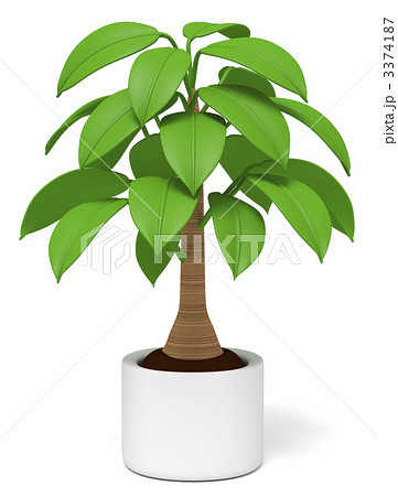 観葉植物のイラスト素材 3374187 Pixta