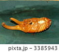 蛹 ヘラクレスオオカブト カブトムシの写真 3385943