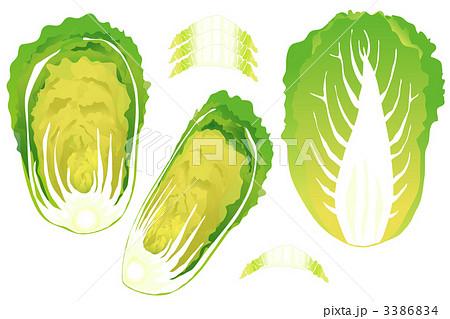断面 野菜のイラスト素材 - PIXTA