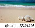 景色 風景 海岸線の写真 3389846