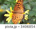 羽を広げた蝶 3406854
