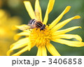 黄色い花に止まるハチ 3406858