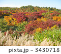 栗駒山の紅葉 3430718