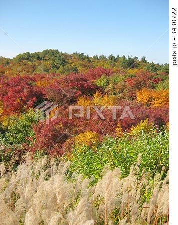 栗駒山の紅葉 3430722