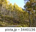 針葉樹 唐松 山林の写真 3440136