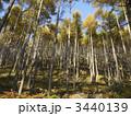唐松 山林 針葉樹の写真 3440139