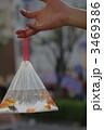 キンギョ 淡水魚 琉金の写真 3469386