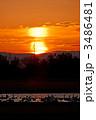 朝焼け空と白鳥 3486481