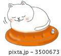 湯たんぽの上で寝る白猫 3500673