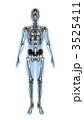骸骨 透過 骨のイラスト 3525411