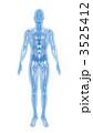 透過 骨格 人体のイラスト 3525412