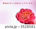 梅(写真) 3528581