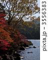 秋の白駒池 3556383