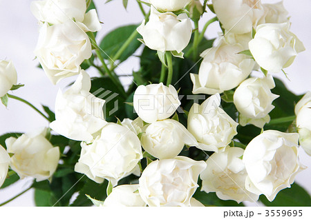 コットンカップという名前の白いバラの花束 3559695