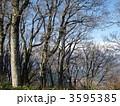 ブナの原生林 3595385