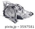 クロラブ 3597581