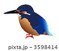 カワセミ かわせみ 鳥のイラスト 3598414