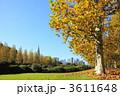 プラタナス スズカケノキ 紅葉の写真 3611648
