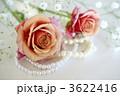 薔薇とパール 3622416