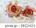 薔薇とパール 3622421