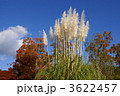 穂 羽毛 パンパスグラスの写真 3622457
