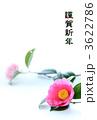 年賀状 椿の花 3622786