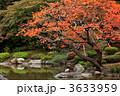 ハゼ ハゼノキ 櫨の木の写真 3633959
