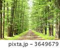 並木道 カラマツ並木 新緑の写真 3649679