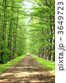 並木道 カラマツ並木 新緑の写真 3649723