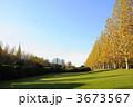プラタナス スズカケノキ 紅葉の写真 3673567
