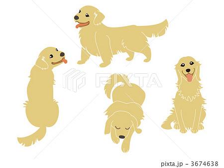犬 ゴールデンレトリバーレトリーバーのイラスト素材 3674638