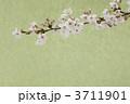 桜 3711901