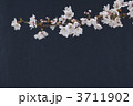 桜 3711902