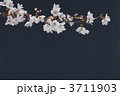 桜 3711903