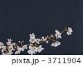 桜 3711904