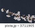 桜 3711905