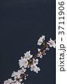 桜 3711906