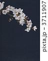 桜 3711907